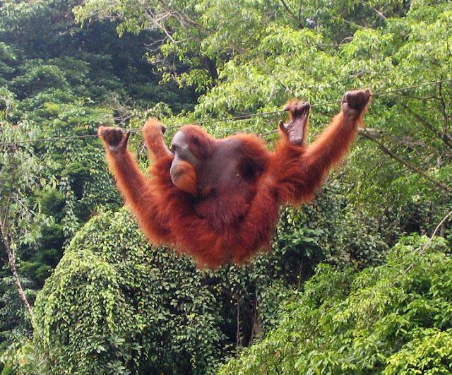 Objek wisata Bukit Lawang Sumatera Utara 2