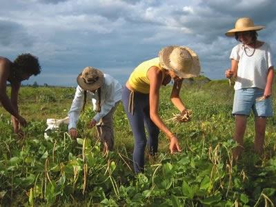 Με μαζικές κινητοποιήσεις απειλούν οι αγρότες για το φόρο στα αγροτεμάχια