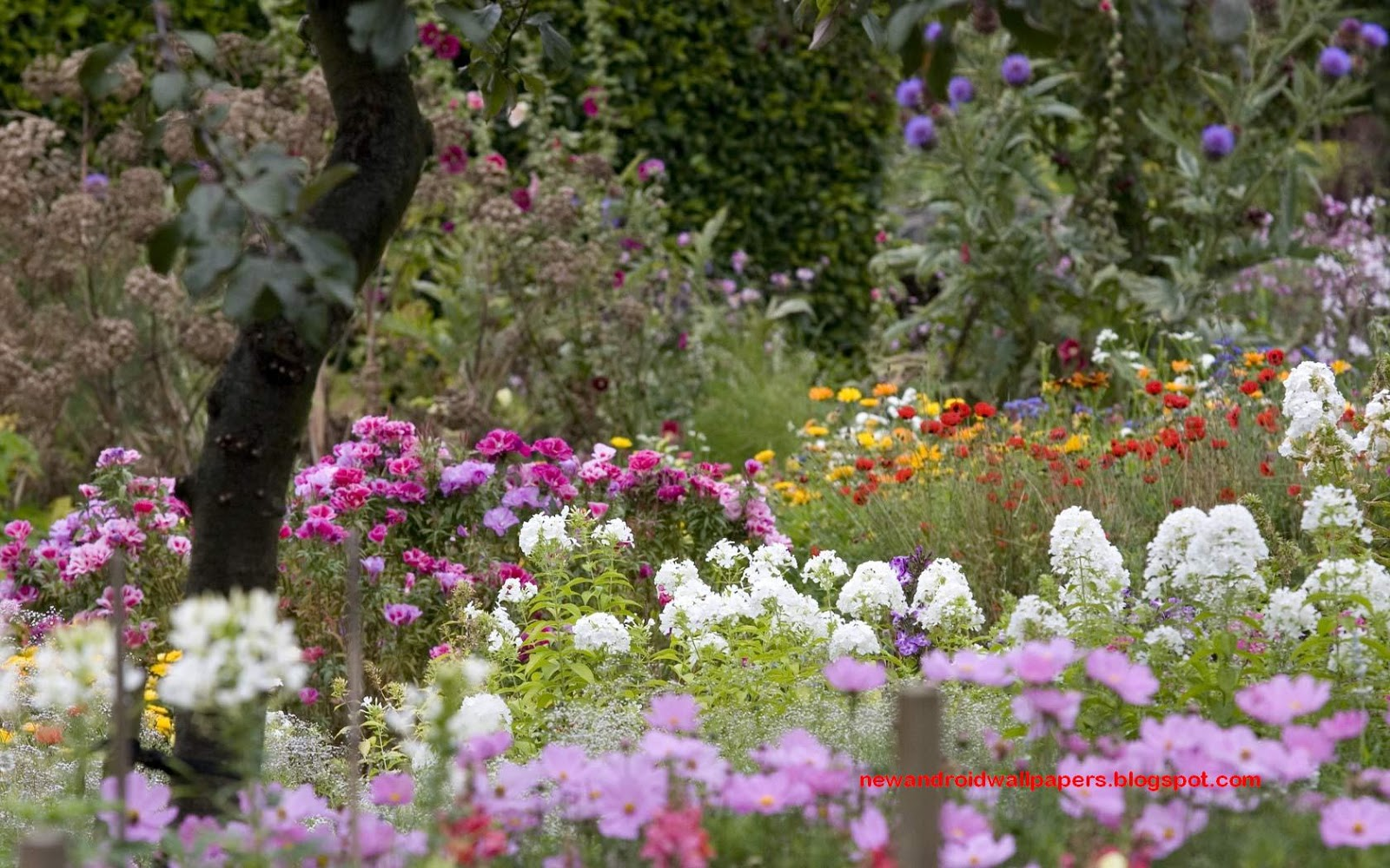 Beautiful collection of home garden wallpapers download for Beautiful flower landscapes