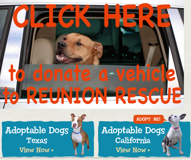 Donate Your Car to Reunion Rescue