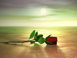 صورة وردة جميلة جدا