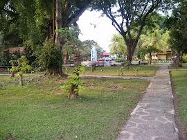 jalanan taman