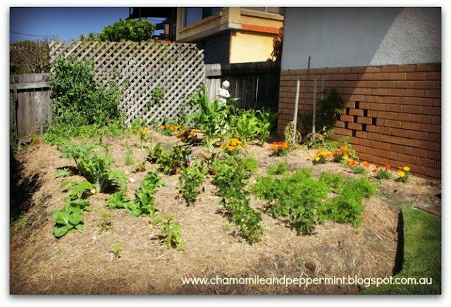 Chamomile & Peppermint Blog - Grow your own food and medicine this spring