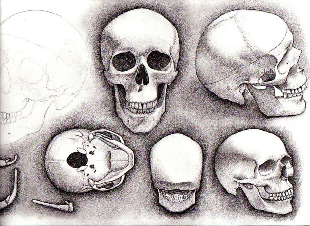 """Sketchbook study of the human skull"" 2009"