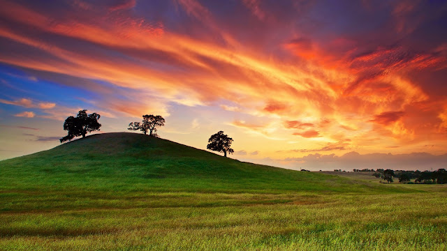 USA California spring sunset grass hill trees red sky HD Wallpaper