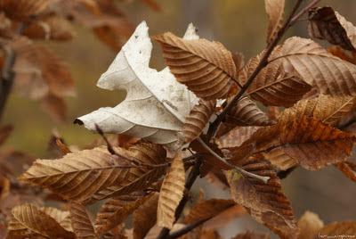 poze_toamna_autumn_l'automne_Herbst_otoño_ősz_φθινόπωρο_imagini