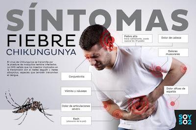 Zancudo doméstico virus chikungunya
