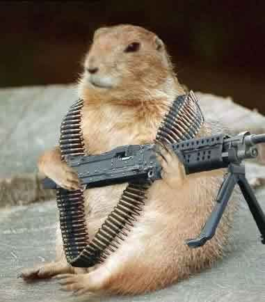 Squirrels with Guns
