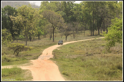Beautiful Kanha Forest