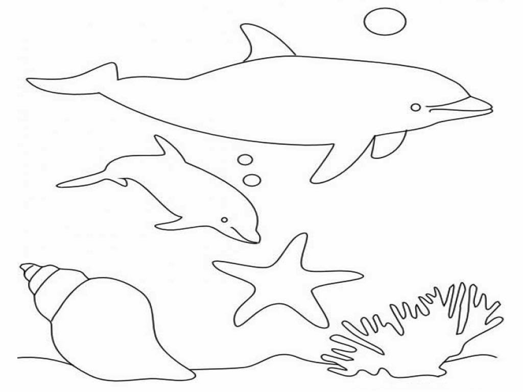 Colour drawing free wallpaper dolphins coloring drawing for Dolphin coloring pages to print out