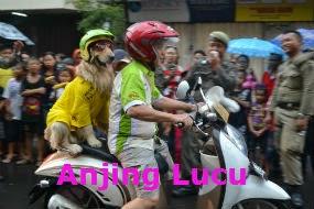 Anjing Lucu