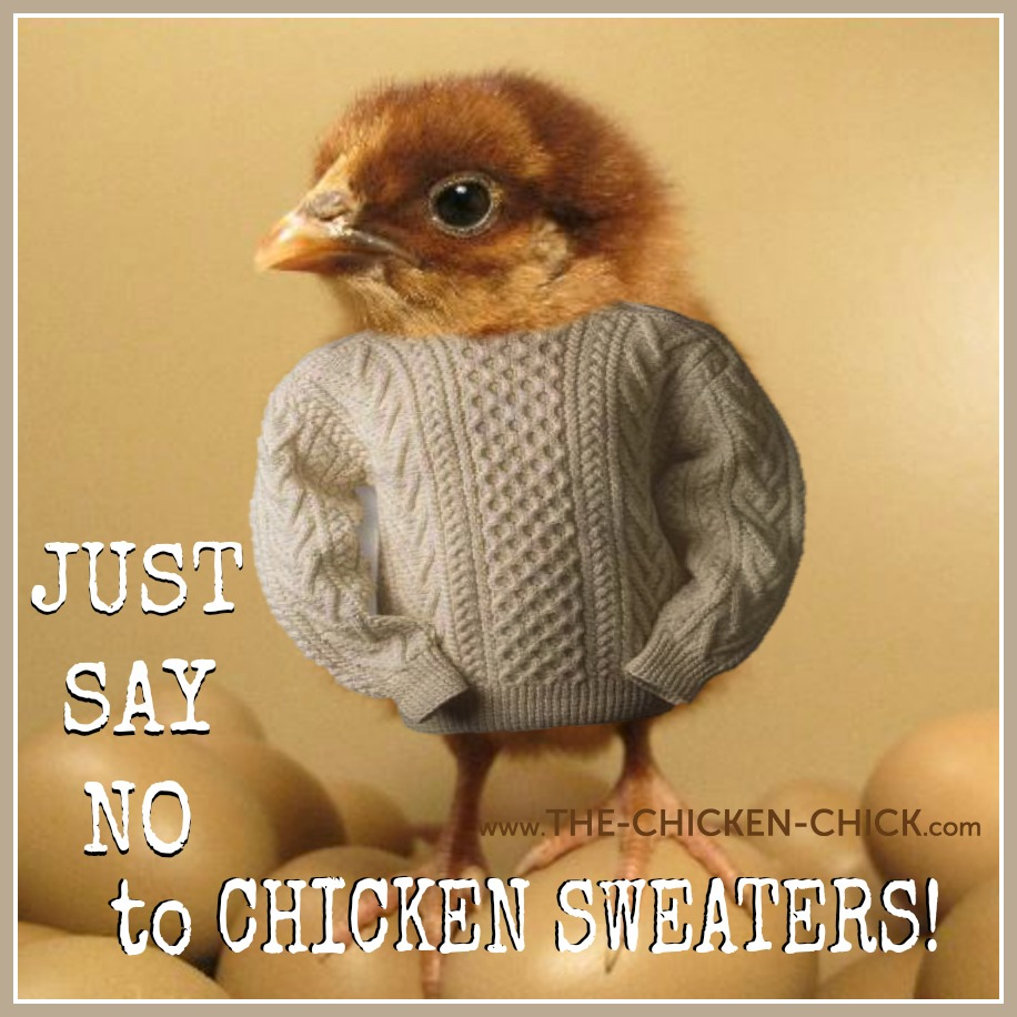 the chicken chicken sweaters just say no