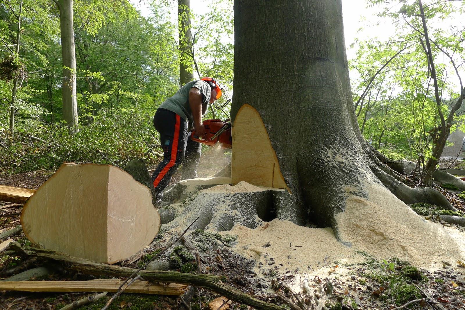 Arboretum heverleebos duurzaam bosbeheer en bomen kappen hoe rijm je dat wandel mee op zo 18 - Hoe een boom te verlichten ...