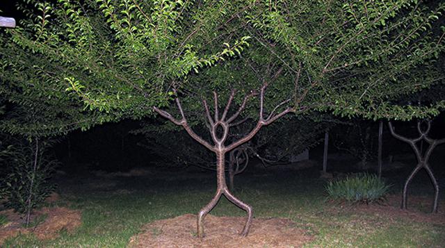 El arte de convertir árboles jóvenes en obras de arte viviente