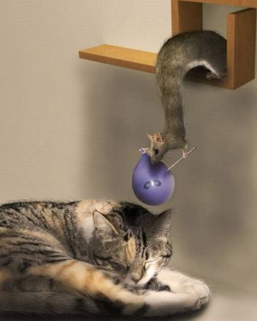 cat and tupai
