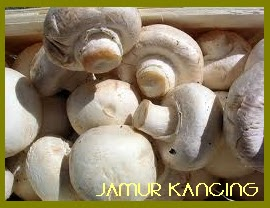 jamur champignon