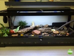Matt Gomez's terrarium