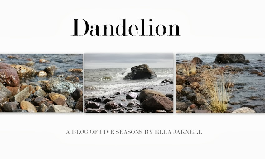 Dandellion