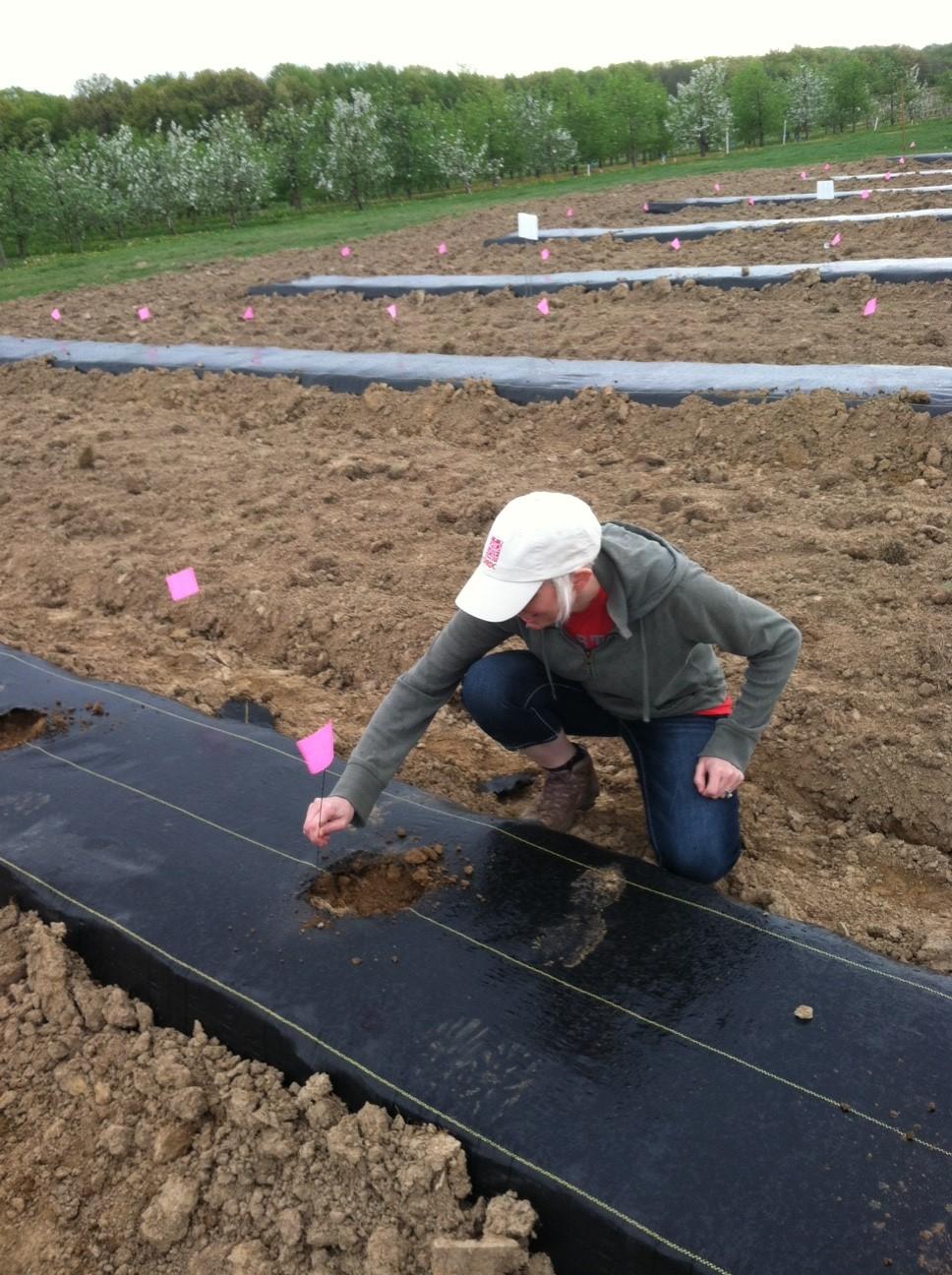 The Agricultural Landscape Ecology Lab Hops Yard Progress