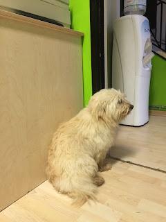 Βρέθηκε σκυλάκος στο Άνω Λαγονήσι σήμερα το πρωί. Δεν έχει κολάρο είναι φοβισμένος αλλά πολύ φιλικός.