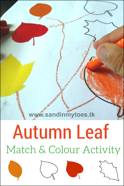 Autumn leaves matching and colouring activity for toddlers and preschoolers, with free printable.