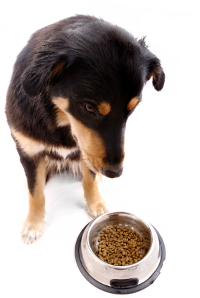 What Do I Do To Get My Pet To Eat Again Pet Lovers Corner