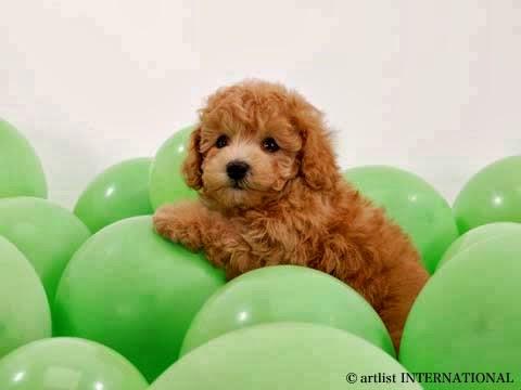 Cute Dogs 18