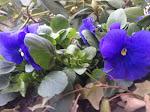 Wiosna afiszuje się w ogródku