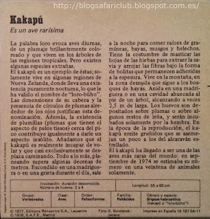 Blog Safari Club, características del Kakapú
