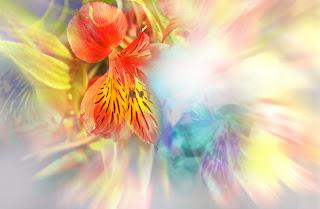 Fondo Romatico abstracto flores