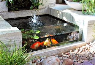 Contoh Taman Kolam Ikan Berukuran Kecil