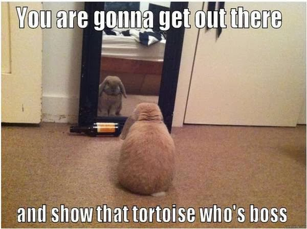 30 Funny animal captions - part 17 (30 pics), funny caption, animal pic with funny caption