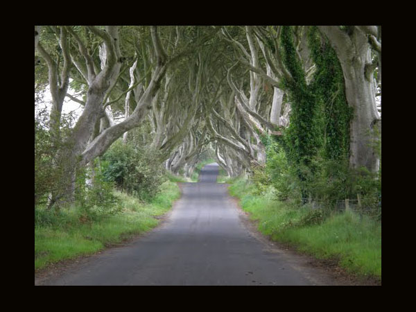 The Dark Hedges, Ballymoney Ireland by Bainketa as seen on linenandlavender.net Take me there. http://www.linenandlavender.net/p/blog-page_5.html