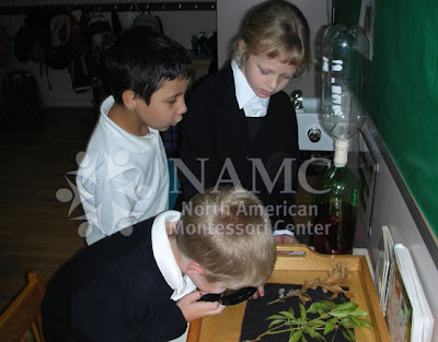 most rewarding NAMC Montessori student language barriers children looking at plants