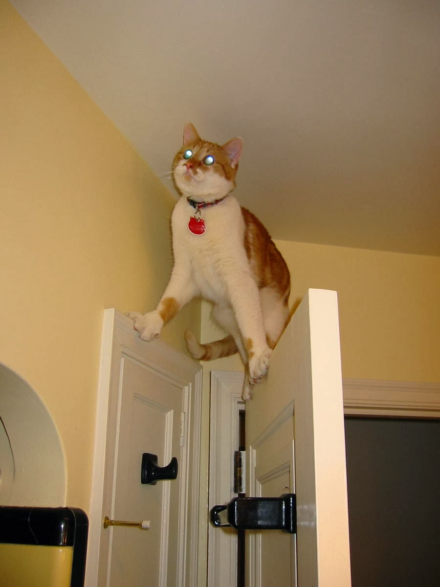 Funny cats - part 93 (40 pics + 10 gifs), cat stands on door