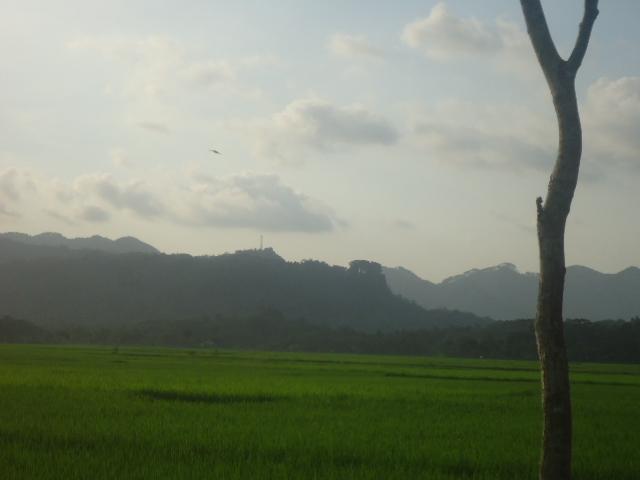 Foto Pemandangan alam di sore hari