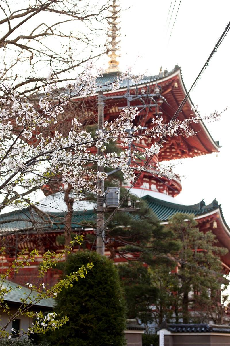 Narita san en primavera