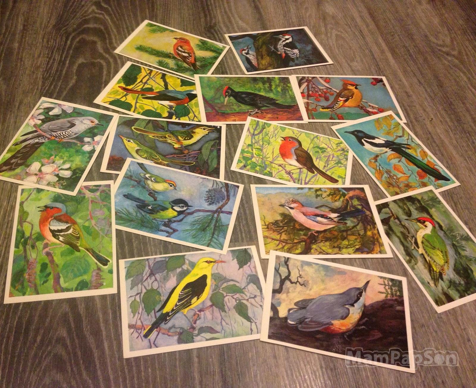 птицы русского леса
