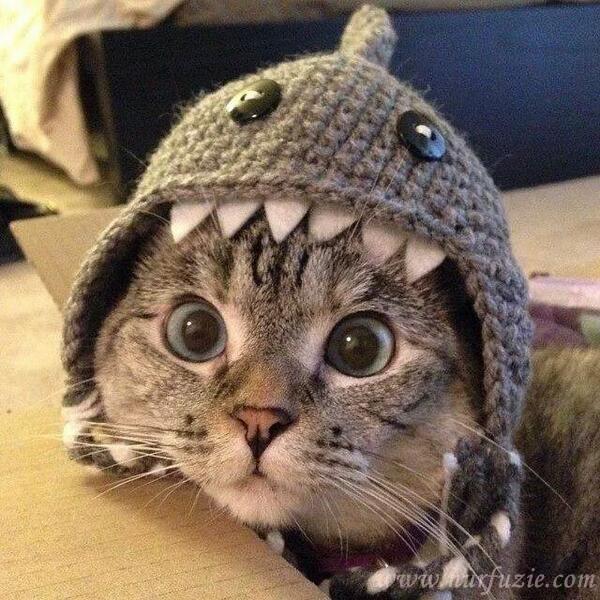 rawatan kucing