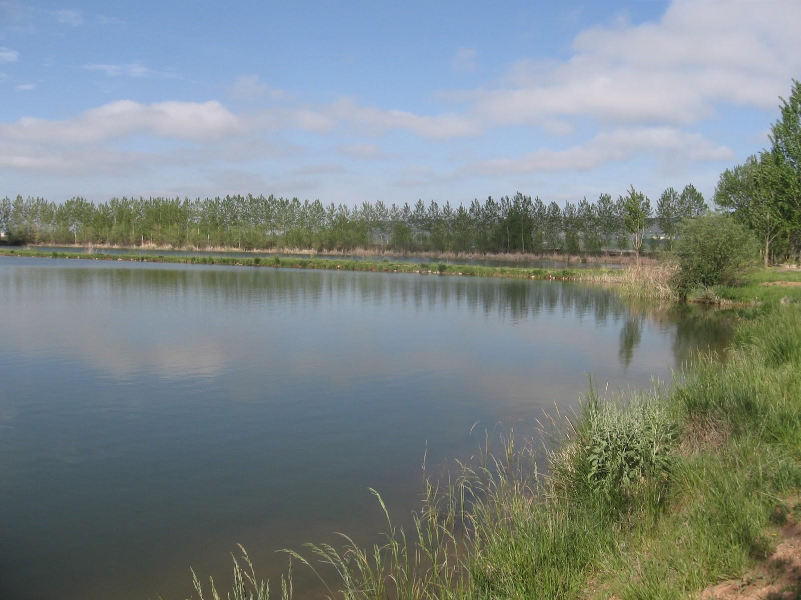 Rios y truchas lagunas privadas de palenzuela for Crianza de truchas en lagunas
