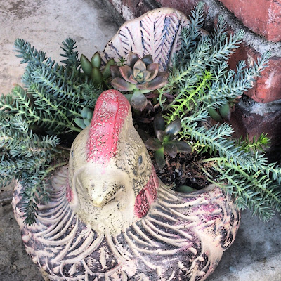 succulents in chicken planter