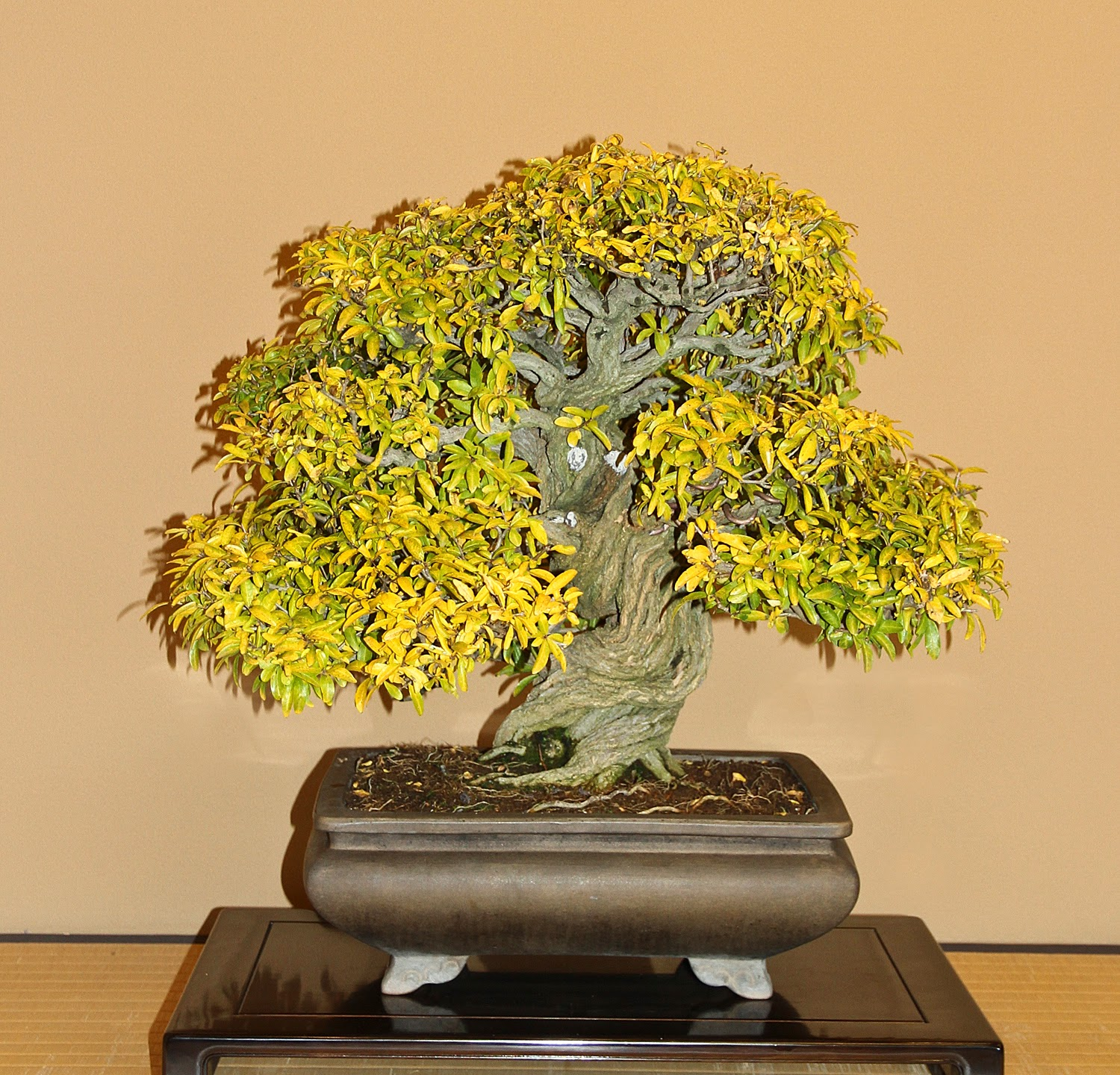 The Little Bonsai December 2013
