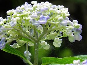 田舎暮らしを賃貸の町屋(町家)でBlogの花