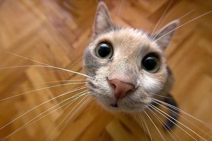 Смешная фотография кота - уставился в камеру