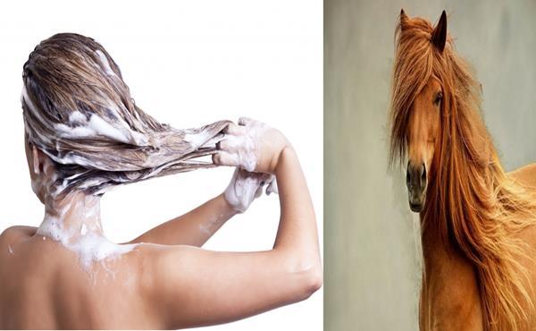 Shampoo para Cavalos faz o Cabelo Crescer