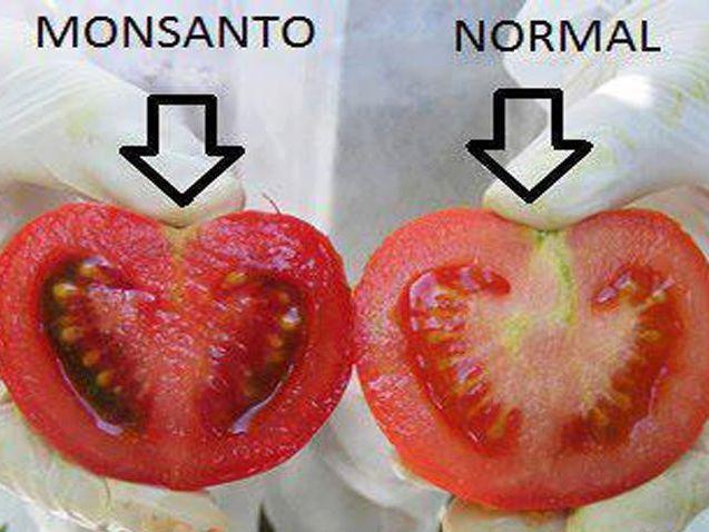 12 productos cancerígenos creados por Monsanto