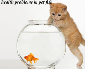 health problems in pet fish