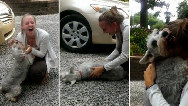 Anjing ini Menangis Setelah Dua Tahun Berpisah Dengan Majikannya