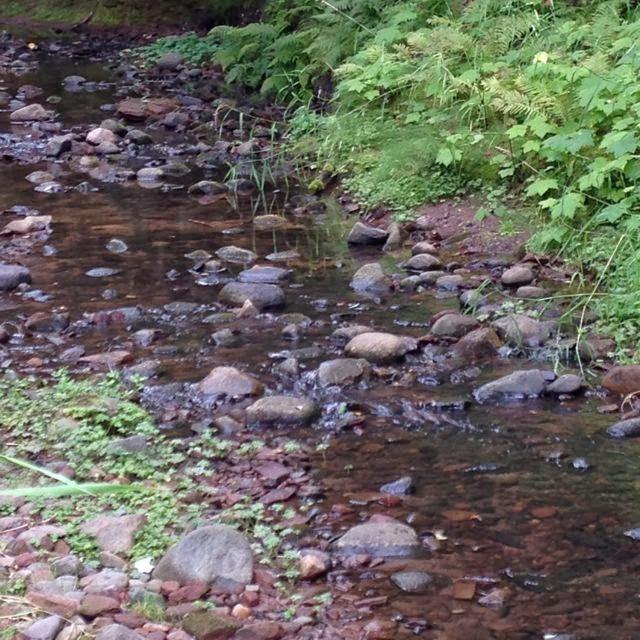 stream near Port Wing WI