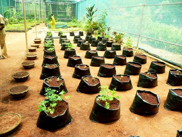 India gardening turning the kitchen into a terrace garden for Terrace vegetable garden by harikumar